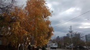 Fall colours on a walk downtown Toronto.