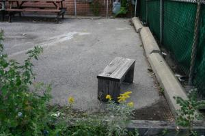 Park bench with yellow flowers, Toronto.